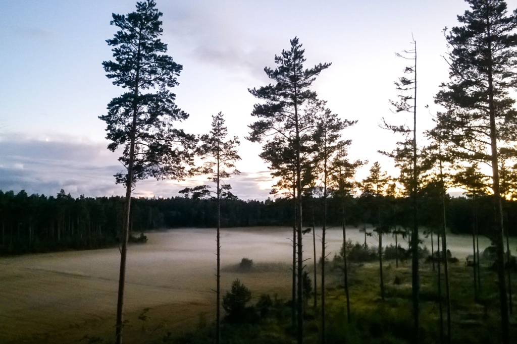 Evening mist in Isoniittu. Photo by Emma.